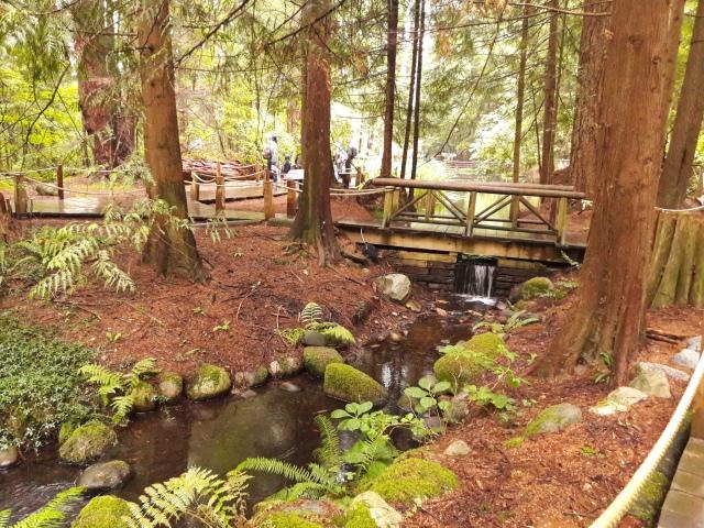 capilano, capilano suspension bridge park, the living forest capilano, forest, nature, vancouver, canada, travel blog, cabin crew blog, flight attendant blog