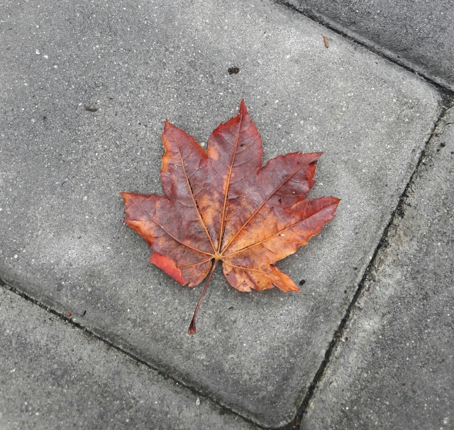 maple leaf, canada, vancouver
