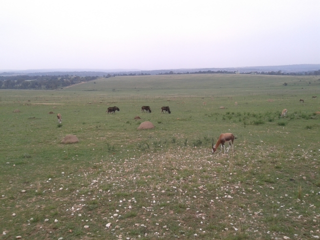 lion and safari park gauteng, johannesburg, south africa, joberg, safari, cabin crew blog, flight attendant blog, travel blog