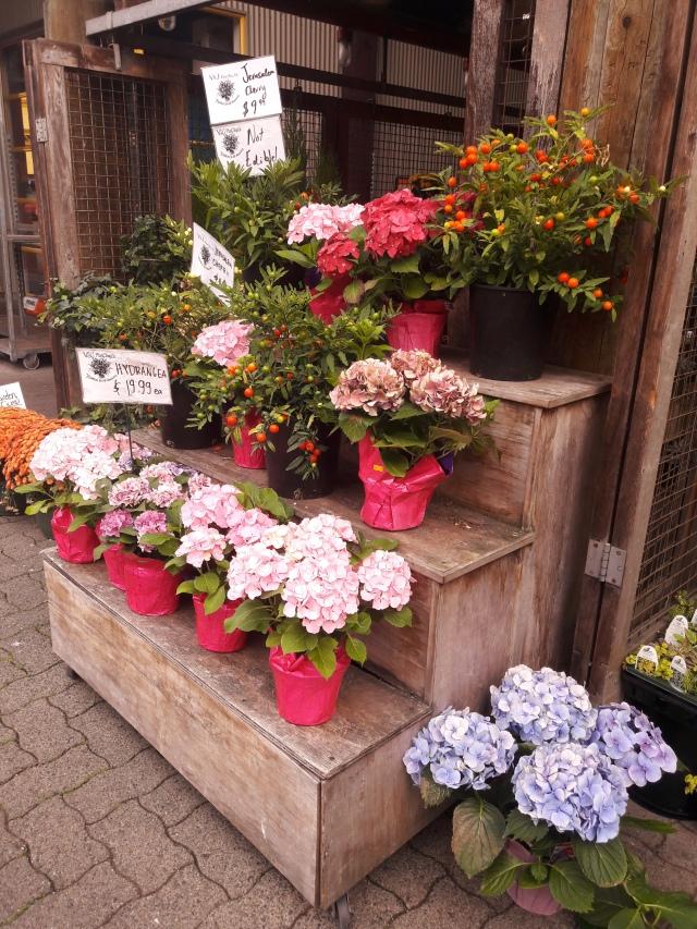 granville island public market, vancouver, flowers, travel, cabin crew blog, flight attendant
