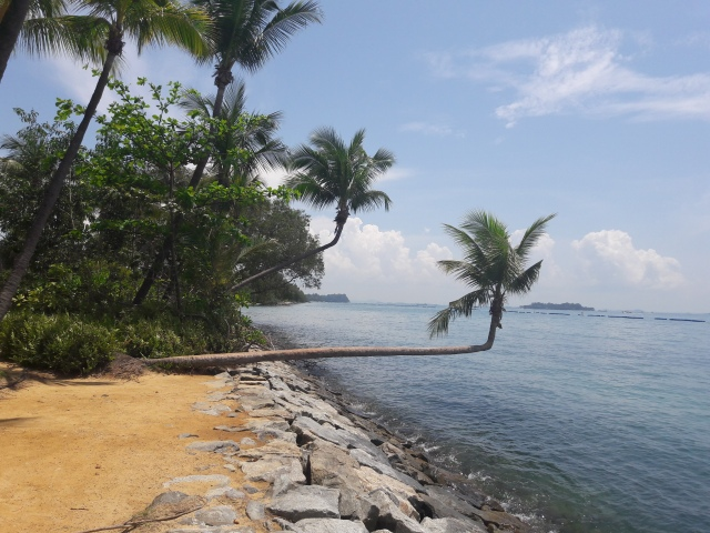 sentosa island, sentosa, singapore, beach, fallen palm tree, travel blog, cabin crew blog, flight attendant blog